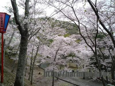 たつの市さくらまつり 桜のトンネル